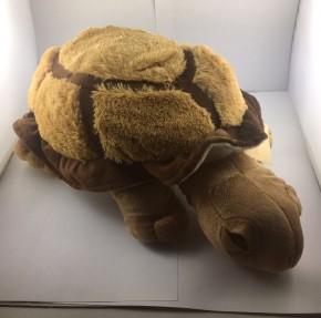 Schildkröte CHILLY